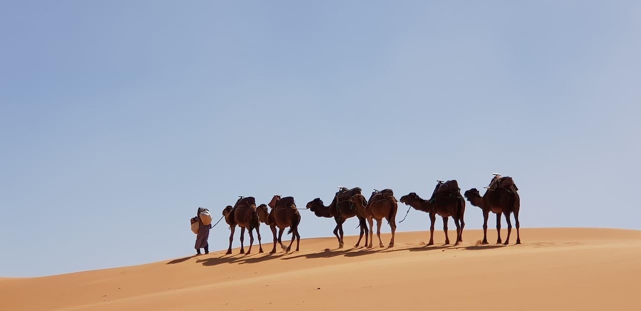 eredità dei 17 cammelli